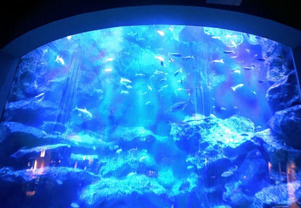 すみだ水族館【東京スカイツリータウン】口コミ・体験レポート