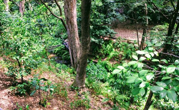 椿山荘の庭園 ほたる沢