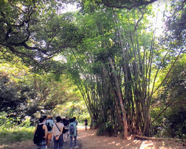 ガンガラーの谷の巨竹(きょちく)