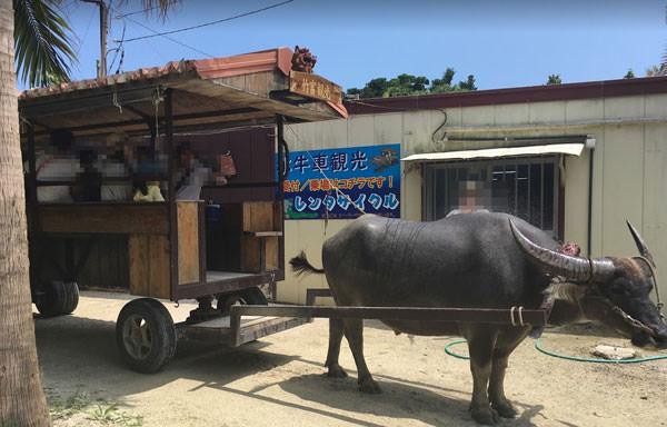 竹富島の水牛車で街並みを楽しむ