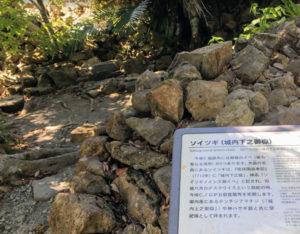 019nakijingusuku