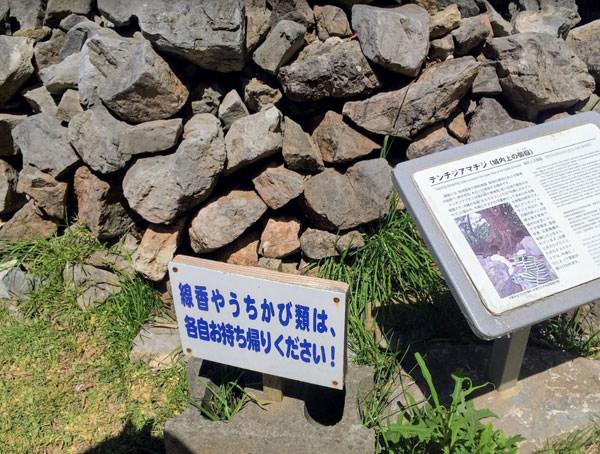 020nakijingusuku
