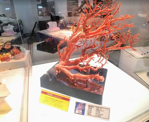 古宇利島シェルミュージアムの赤珊瑚