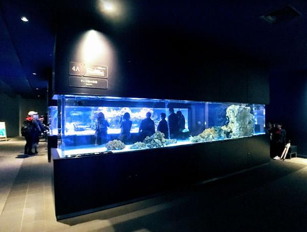 すみだ水族館のサンゴ礁