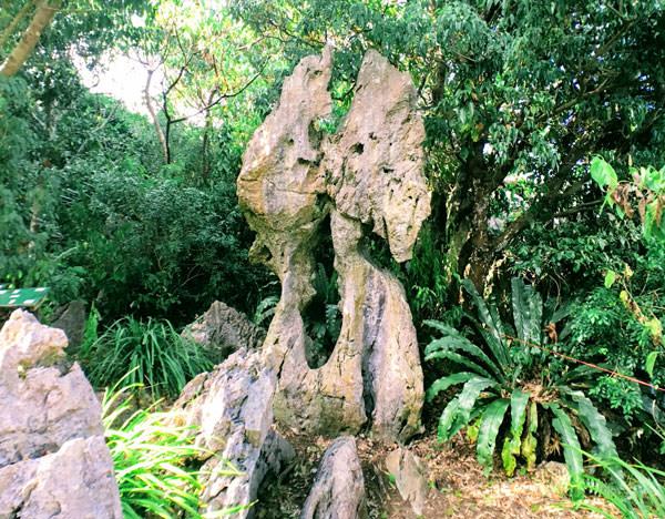 大石林山「骨盤石」