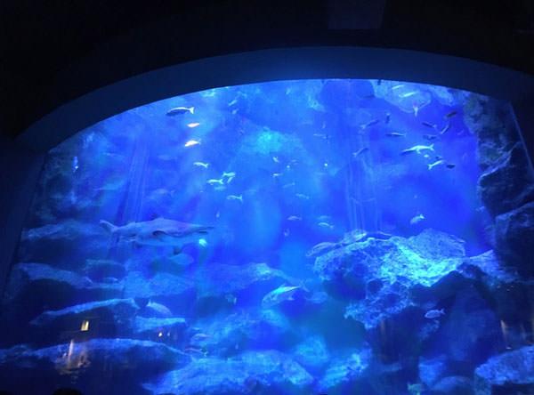 東京大水槽で小笠原諸島の海を再現
