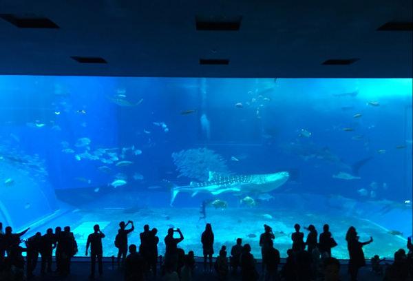 沖縄美ら海水族館へ女子旅!ジンベエザメとマンタに会ってきた!