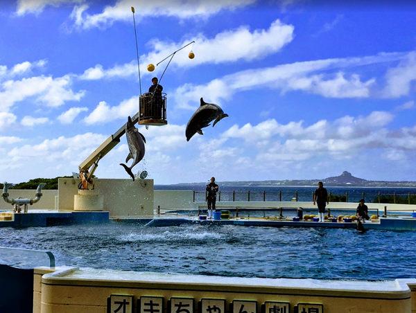 海洋博公園のイルカショー