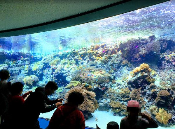 美ら海水族館 サンゴの海