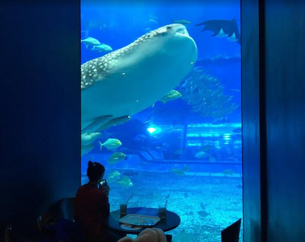 美ら海水族館 カフェ「オーシャンブルー」
