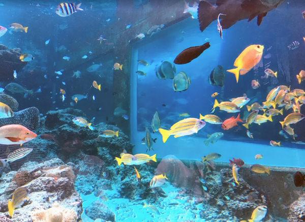 美ら海水族館 熱帯魚の海
