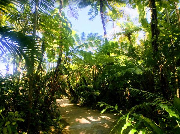 東南植物楽園 ヘゴ林