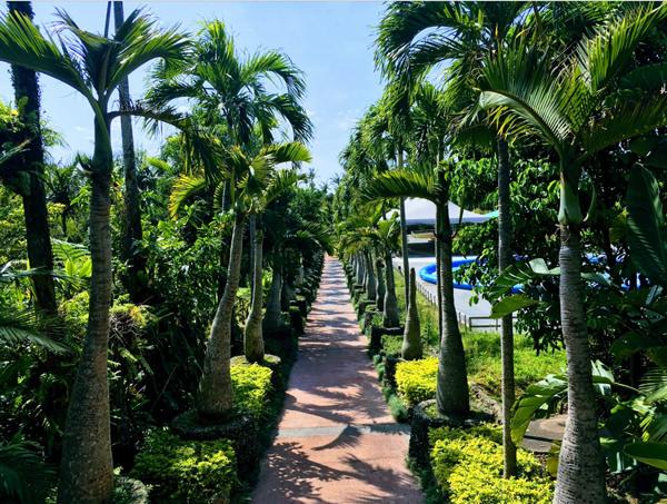 東南植物楽園 トックリヤシ並木