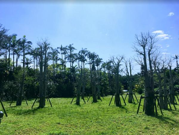 東南植物楽園 バオバブの杜