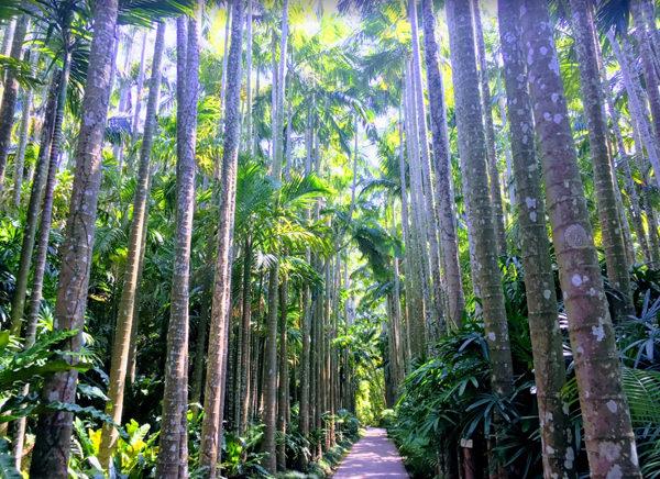 東南植物楽園 ユスラヤシ並木