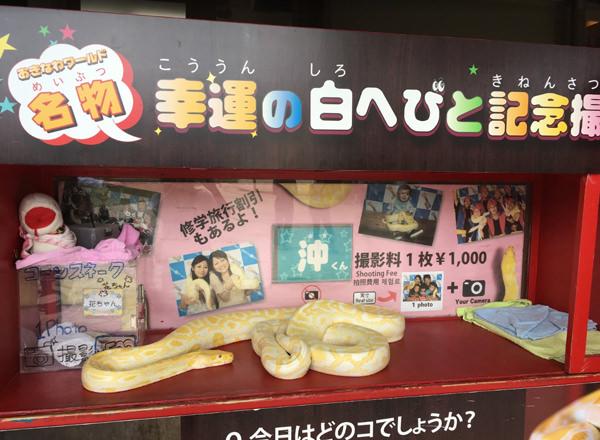 幸運の白ヘビと記念撮影