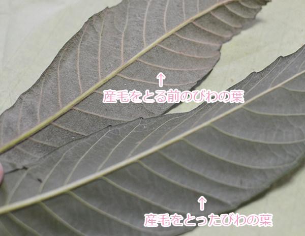 biwacha_tsuku%ef%bc%94